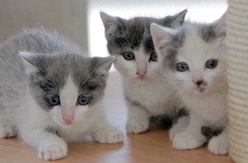 Tierschützer wollen Tierheim nicht verkaufen