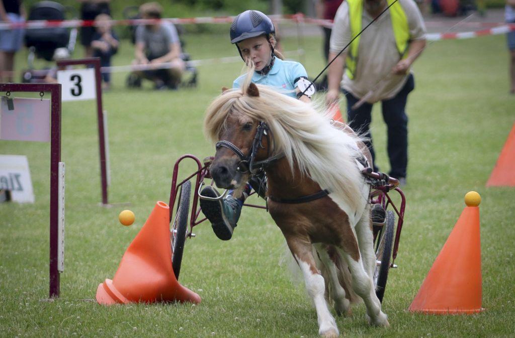 Vom kleinen Shetty bis zum großen Shire-Horse sind am Wochenende Rösser aller Rassen und Größen in Ludwigsburg vertreten. Foto: factum/