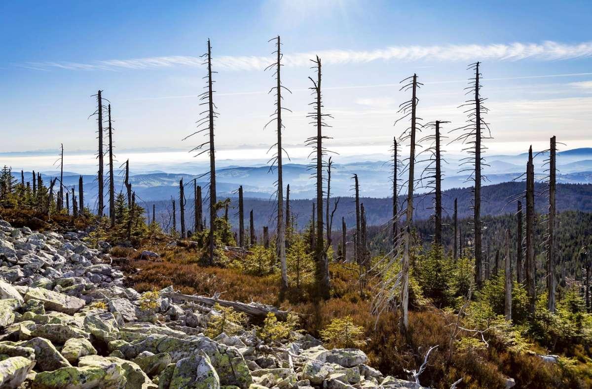 Dem Wald geht es nicht gut. Früher war der saure Regen schuld, heute die Klimaerwärmung. Foto: imago//Stefan Kiefer