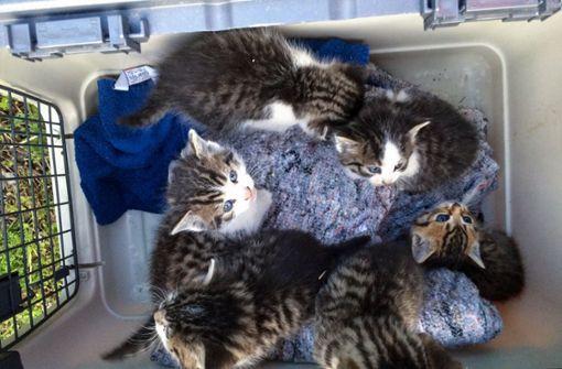 Polizei rettet Katzenkinder aus Gleisbett