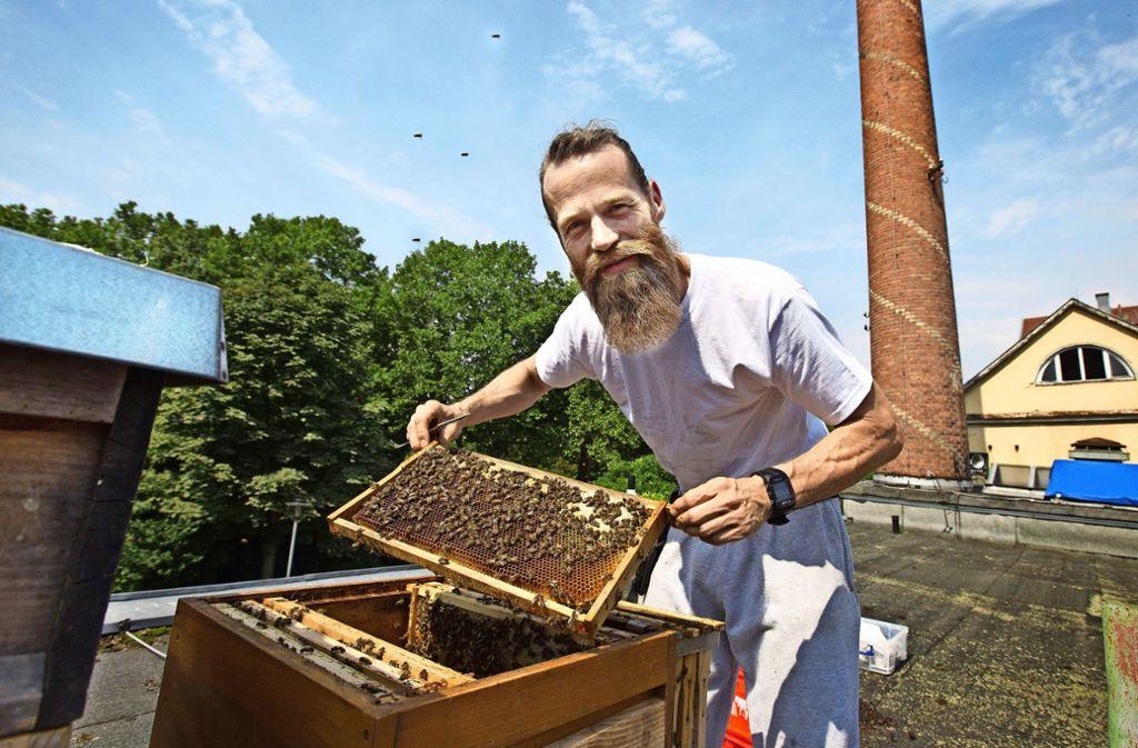 Peter Rust freut sich über die  Entwicklung seiner Bienen auf dem Lorch-Areal. Foto: Ines Rudel