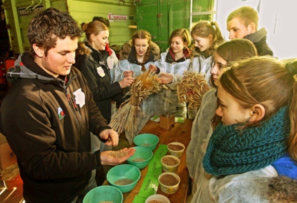 Weizen, Gerste oder Mais?  Auf dem Hof Huber können  die Schüler zeigen, welche Getreidesorten sie erkennen. Foto: factum/Bach