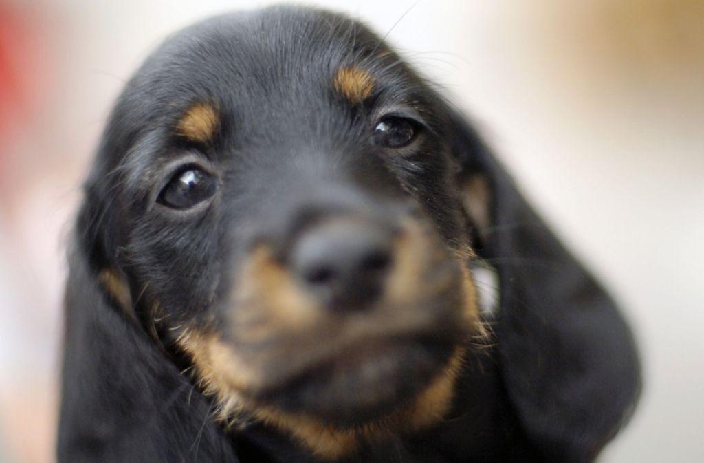 2016 sind in Deutschland mehr als 77 Millionen Hunde geboren worden. Foto: dpa