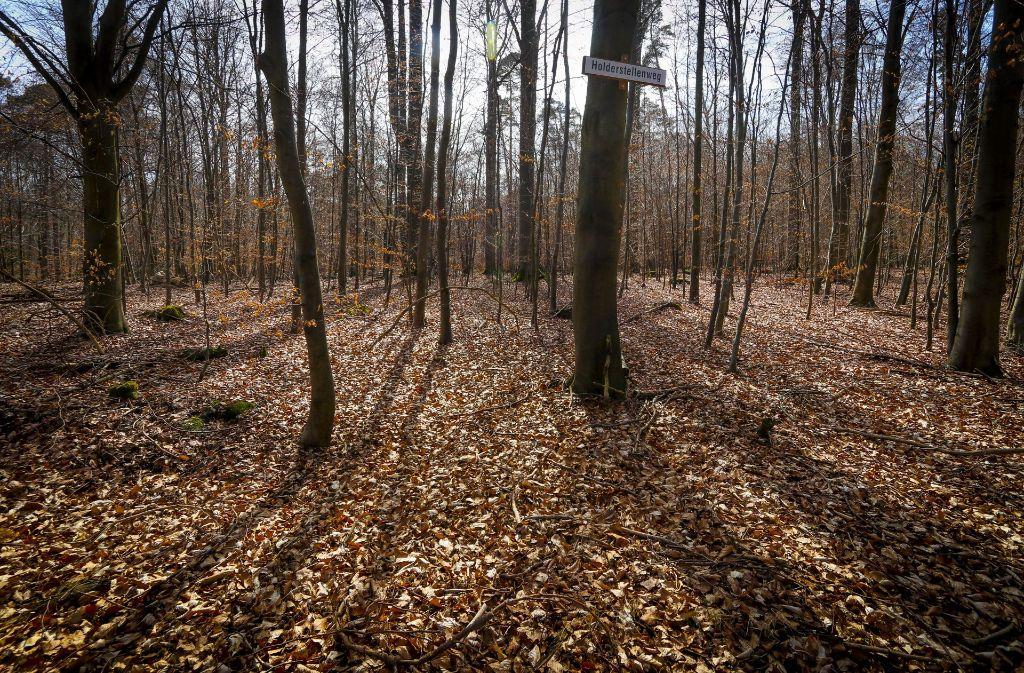 Ein Spaziergänger hatte einen umfangreichen Polizeieinsatz im Wald ausgelöst. Foto: factum/Granville