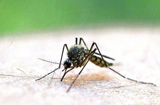Klimawandel bringt Tropenkrankheiten zu uns