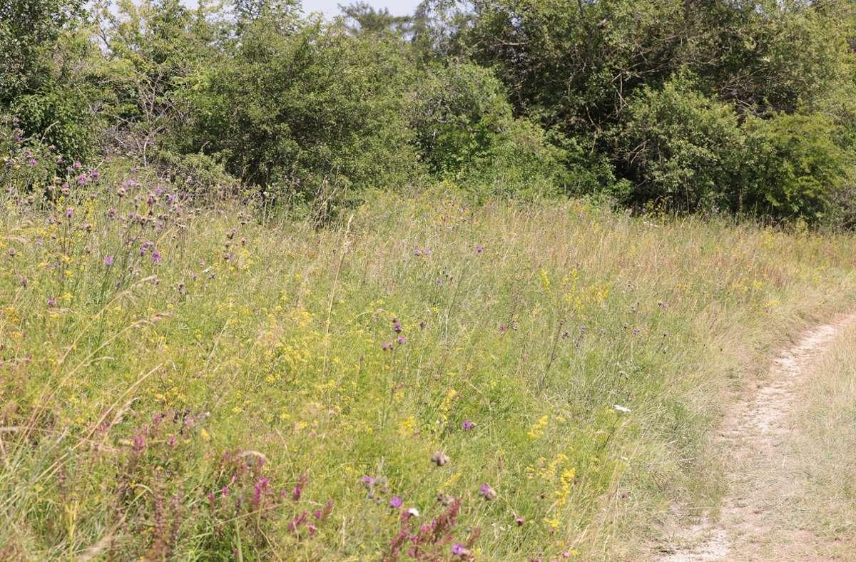 Lebensräume sollen durch Hecken und Blühstreifen verbunden werden. Foto: /Stefanie Schlecht
