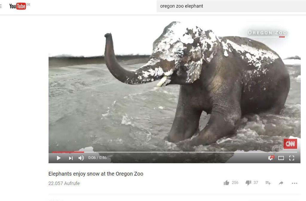 Lily kann sein Glück nicht fassen: Das Elefantenbaby im Zoo von Oregon erlebt den ersten Schee seines Lebens. Foto: Screenshot YouTube/www.youtube.com/watch?v=MUapmaFK5-U