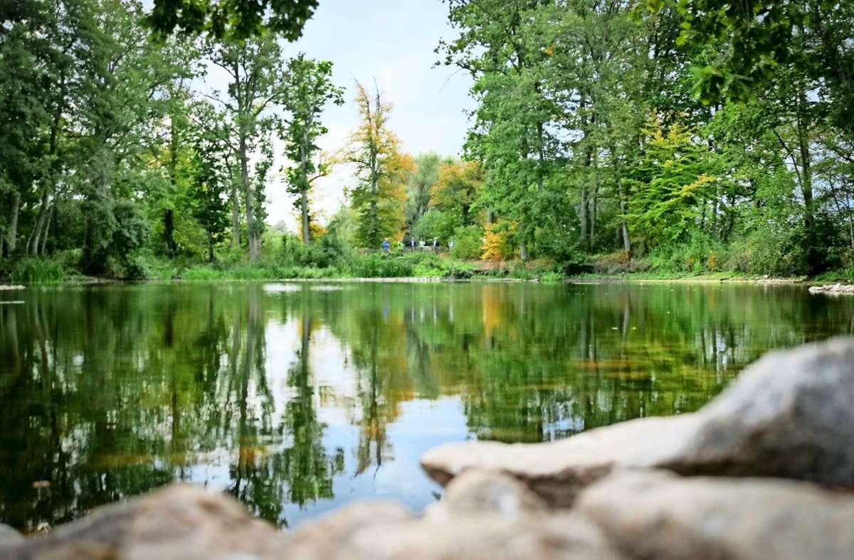 Der Maurener See ist eingezäunt, damit die Uferpflanzen nicht niedergetrampelt werden; hier finden Teichmuscheln und Flusskrebse ein Refugium. Foto: factum/Simon Granville