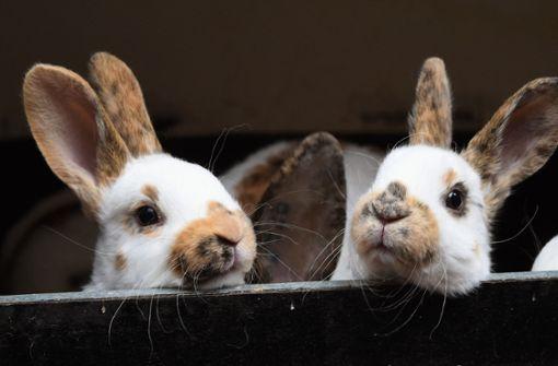 Hasenstall in Flammen – nur ein Kaninchen überlebt