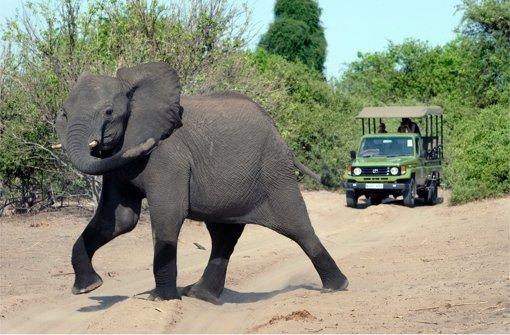 Der Safari-Tourismus hilft gegen Wilderei