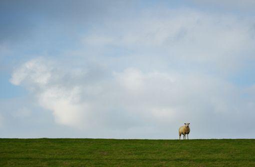 Unbekannter erschießt neun Schafe und Ziegen auf Weide
