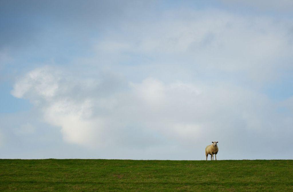 Bei Jena erschoss ein Unbekannter Schafe und Ziegen. (Symbolbild) Foto: dpa/Gregor Fischer