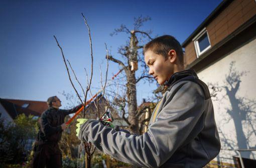 Jugendliche  für den Baumschnitt begeistern