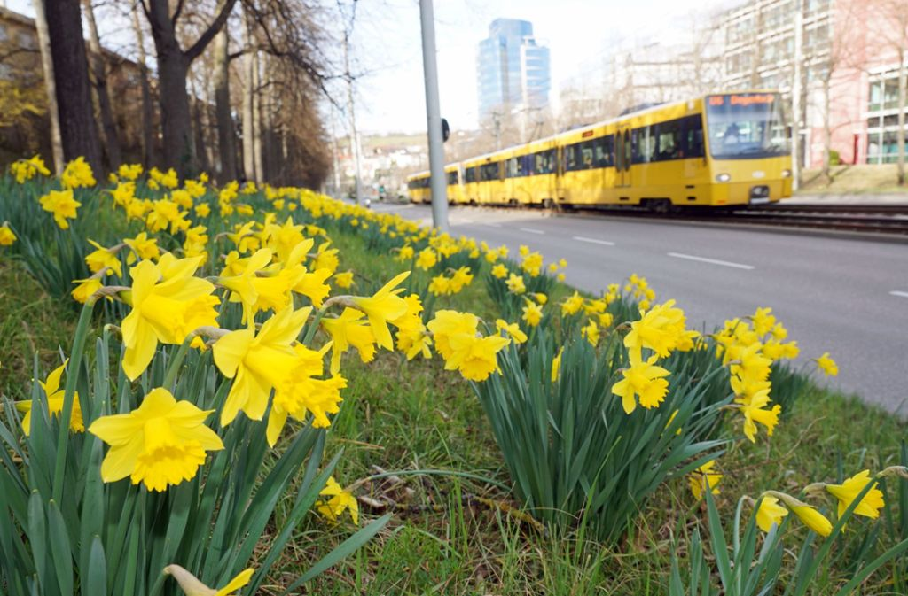 In Stuttgart blühen schon die ersten Frühlingsboten. Foto: Andreas Rosar/ Fotoagentur-Stuttgart