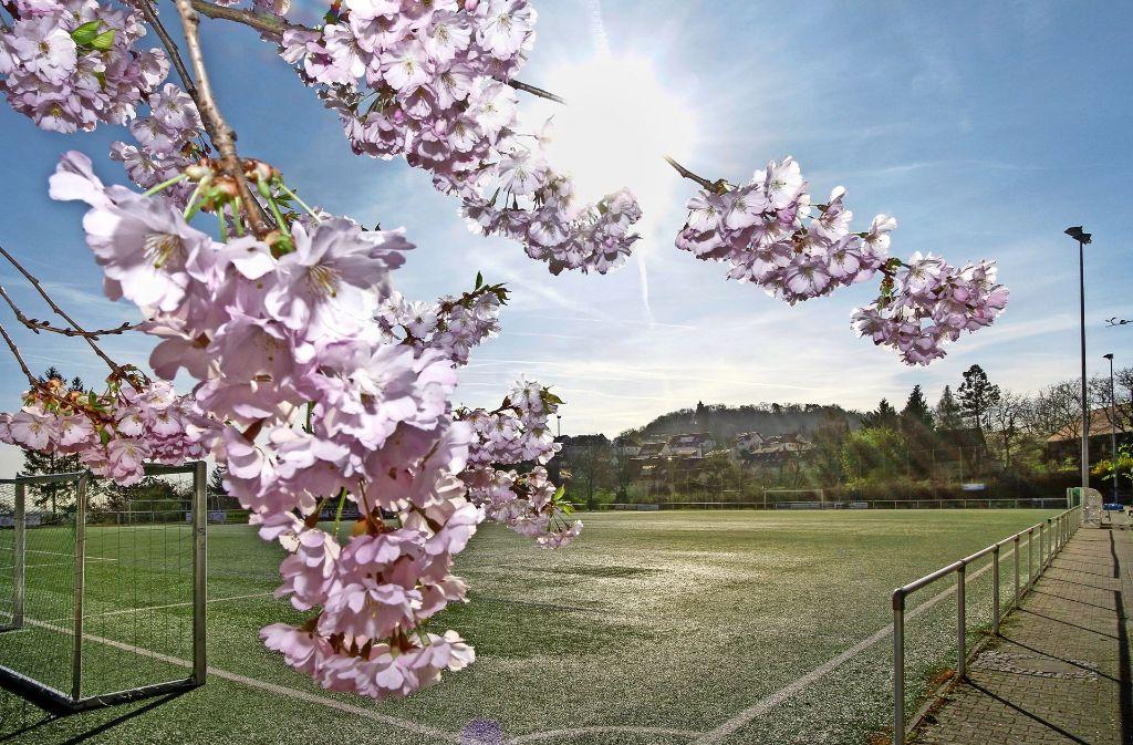 Schon heute  ist es prächtig anzusehen,  doch  als wichtiger  Bestandteil einer   Landesgartenschau  kann das TSG-Gelände  zu noch mehr Farbenpracht aufblühen. Foto: factum/Bach