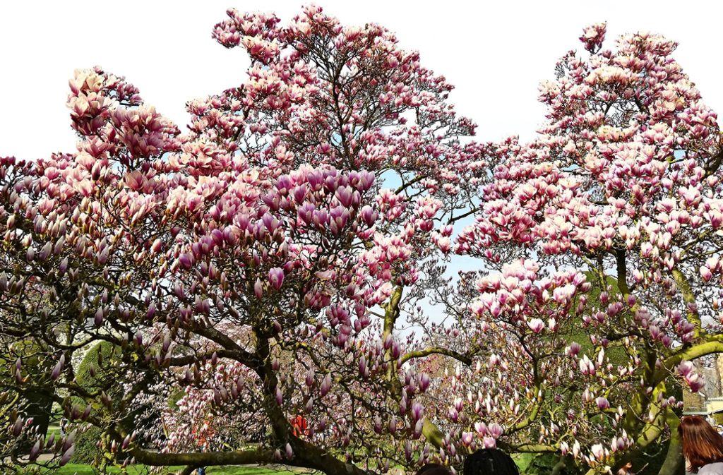 Blütenpracht in der Stuttgarter Wilhelma Foto: Carmen Heusinger von Waldegge