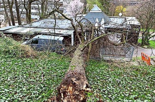 Baum stürzt auf Lokal am Villa-Berg-Park