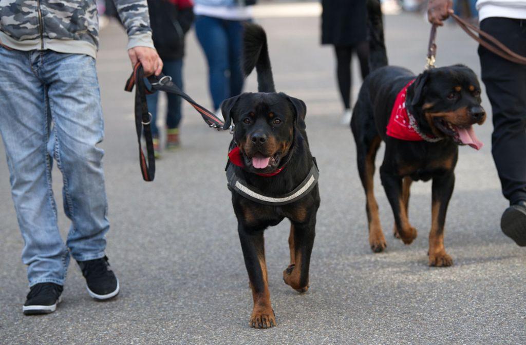 Hunderte Rottweiler-Besitzer aus ganz Deutschland haben sich zur Demo in Rottweil getroffen. Foto: dpa/Ralf Graner