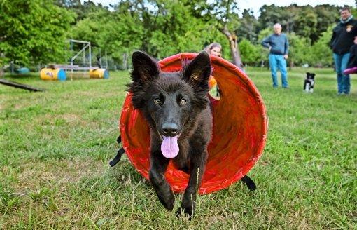 Die Rettungshundestaffel hat Nachwuchs bekommen