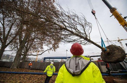 Bahn pflanzt zwei neue Bäume