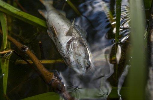 Hälfte der Fische ist tot