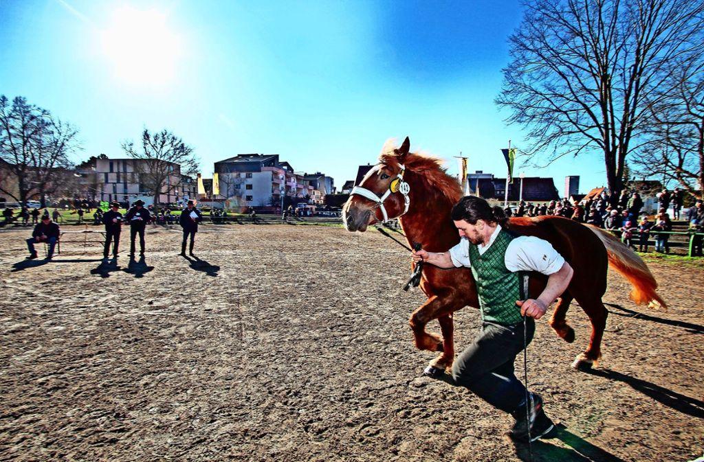 Mit strengen Augen begutachten die Richter (hinten) das Pferd. Foto: factum/Archiv