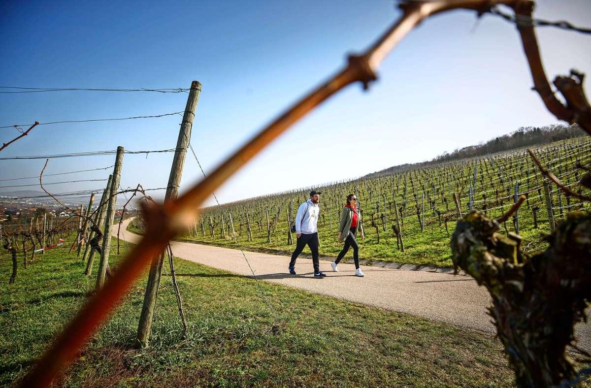 So  beschaulich wird es Anfang August 2022 wohl nicht, wenn Fellbach zum Deutschen Wandertag mehrere Tausend Flaneure  am Kappelberg erwartet. Foto: Gottfried Stoppel