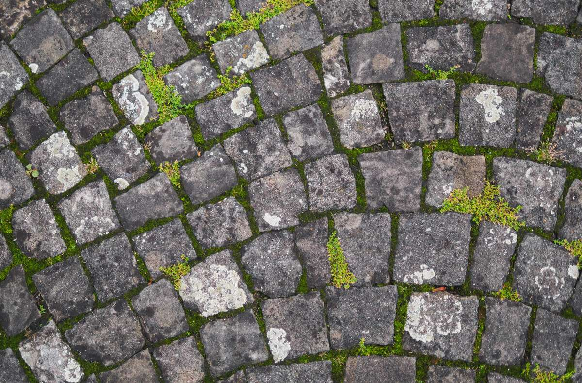 In diesem Artikel geben wir Ihnen 12 Tipps, wie Sie Moos und Grünbelag effektiv entfernen können. Foto: Paulzhuk / Shutterstock.com