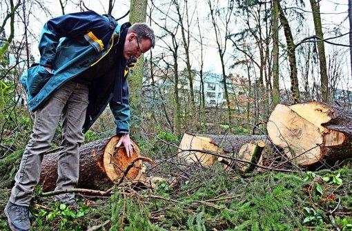 Hagen Dilling (auf dem Foto bei einem Rundgang im  Haldenwald im vorigen Jahr) sorgt sich um das Eschentriebsterben, das auch Bäume auf den Fildern bedroht. Foto: R. Stahlberg