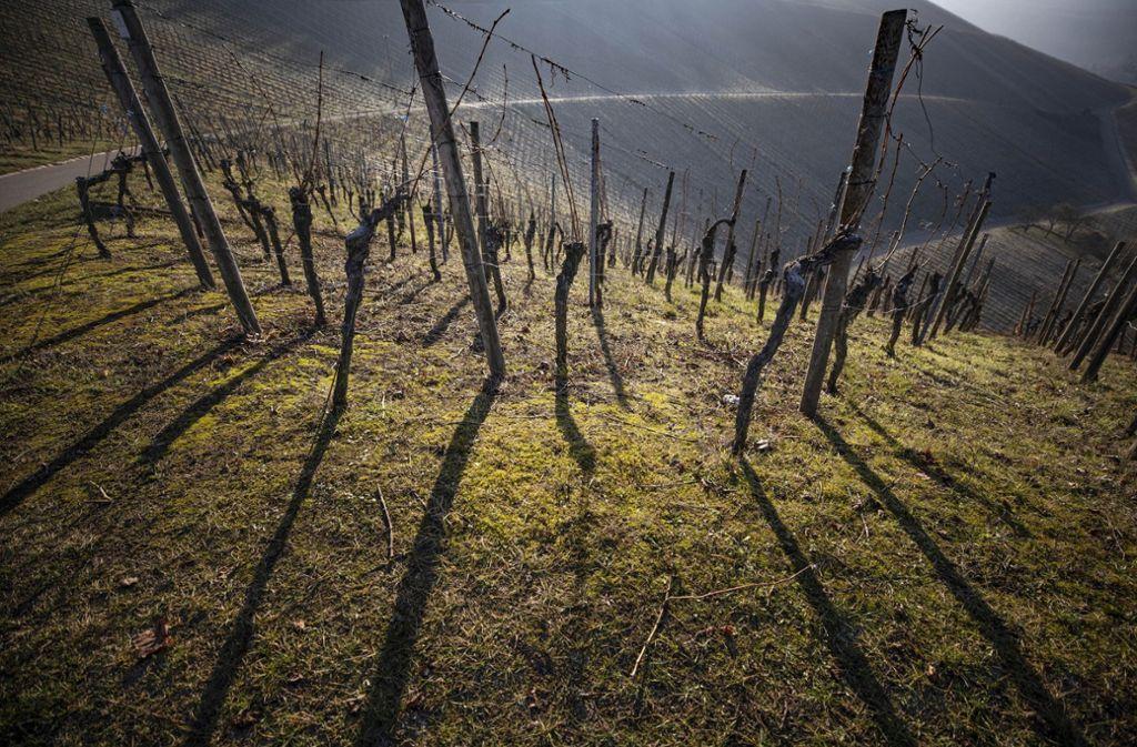 Die Weinberge bei der Yburg gelten als renommierte Lagen. Foto: Gottfried Stoppel