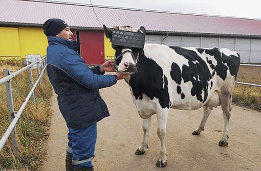 Was haben Kühe im Cyberspace zu suchen?