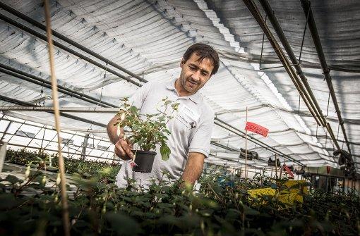Jobs für Flüchtlinge sorgen für Zoff