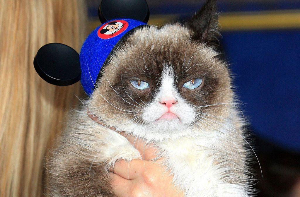 Grumpy Cat: Ein Gendefekt sorgte für die charakteristische Mimik. Foto: dpa