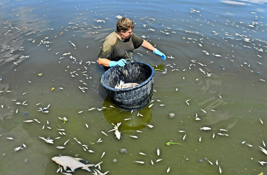 Den Fischen in der Jagst machen auch hohe Temperaturen zu schaffen. (Archivbild) Foto: dpa/Jan-Philipp Strobel