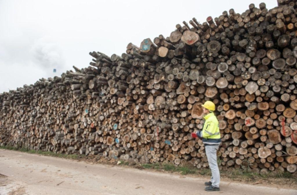 Der Holzverkauf ist ein heißes Eisen zwischen Land und Kartellamt. Foto: dpa
