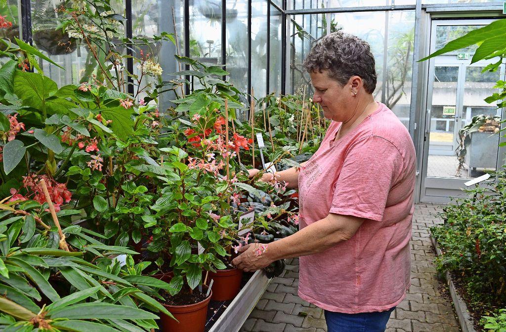 Wenn Pflanzen einfach nicht wachsen wollen, spricht Karin Bühler hin und wieder auch mit ihnen. Foto: Wiebke Wetschera