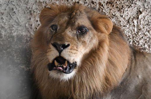 """Behörden befreien verwahrloste Tiere aus """"Höllenzoo"""""""