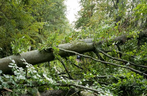 Bäume  im Wald  mutwillig umgesägt