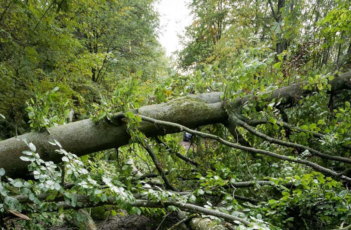 Ein  Unbekannter wütet seit Wochen in den Wäldern der Region. Foto: factum/Simon Granville