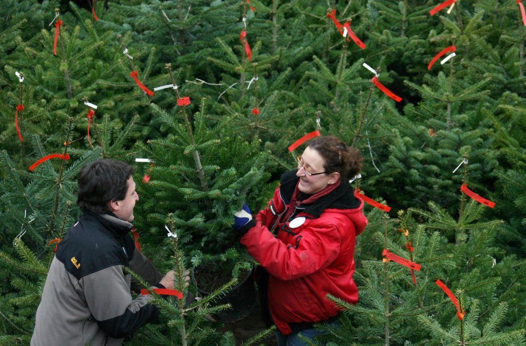 Rund 29,3 Millionen Bäume werden auch in diesem Jahr in deutschen Wohnzimmern stehen. Foto: dpa