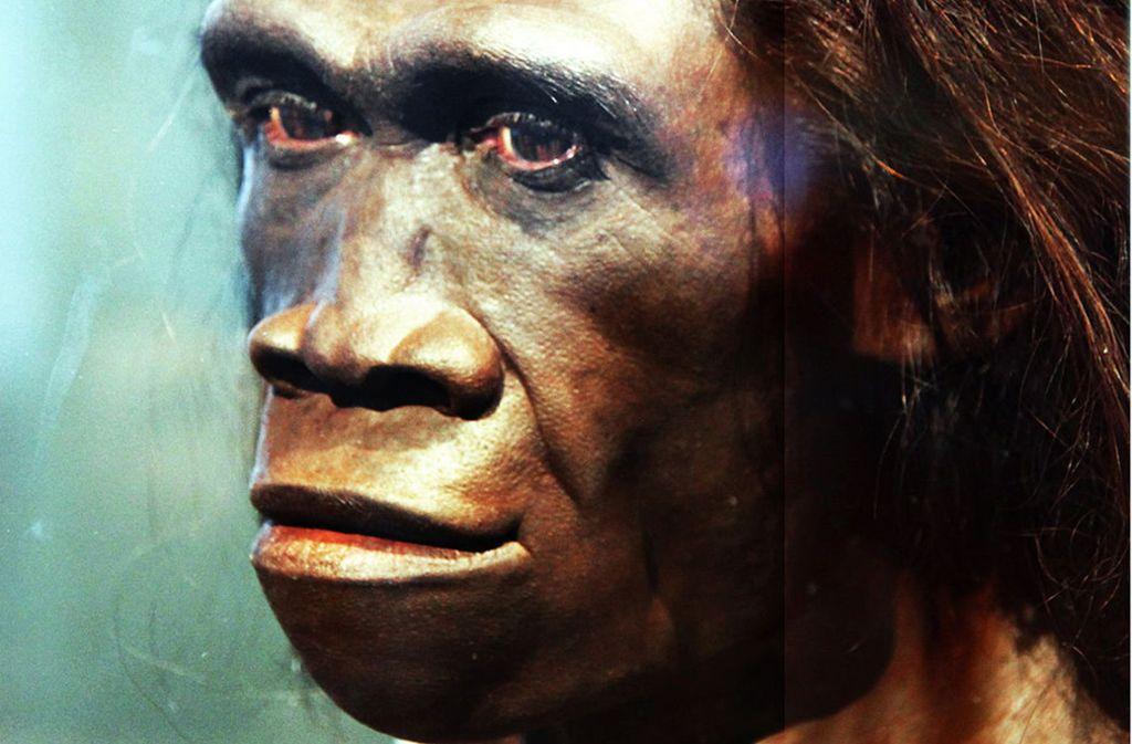 Die Evolution des Frühmenschen: Gesichtsrekonstruktion eines Homo erectus im National Museum of Natural History in den USA. Foto: Wikipedia commons/Tim Evanson CC BY-SA 2.0
