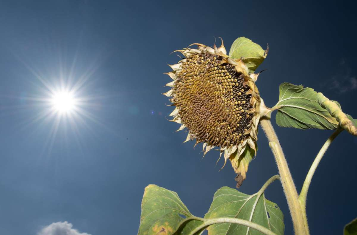 """Hoch """"Frederik"""" sorgte in den vergangen Tagen für hochsommerliche Temperaturen. Foto: dpa/Sebastian Kahnert"""