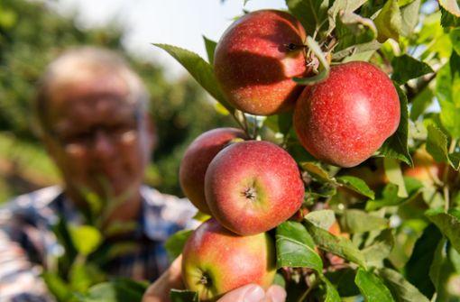 Jahresbilanz macht Obst- und Gemüsebauern wenig Freude
