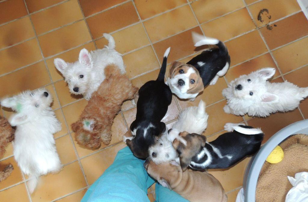 Die Hundewelpen aus dem Tiertransport sind in Quarantäne. Foto: Tierheim Stuttgart (z)