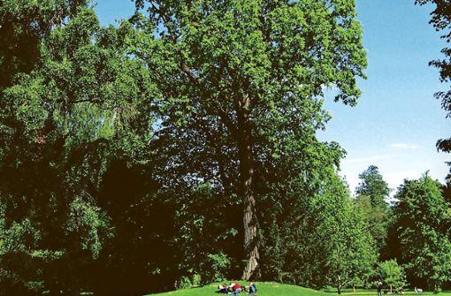 Hier wurzeln Rekordbäume