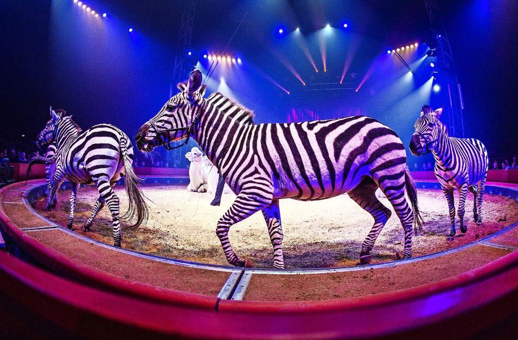 Zebras wie beim Weltweihnachtscircus sind künftig verboten. Foto: dpa