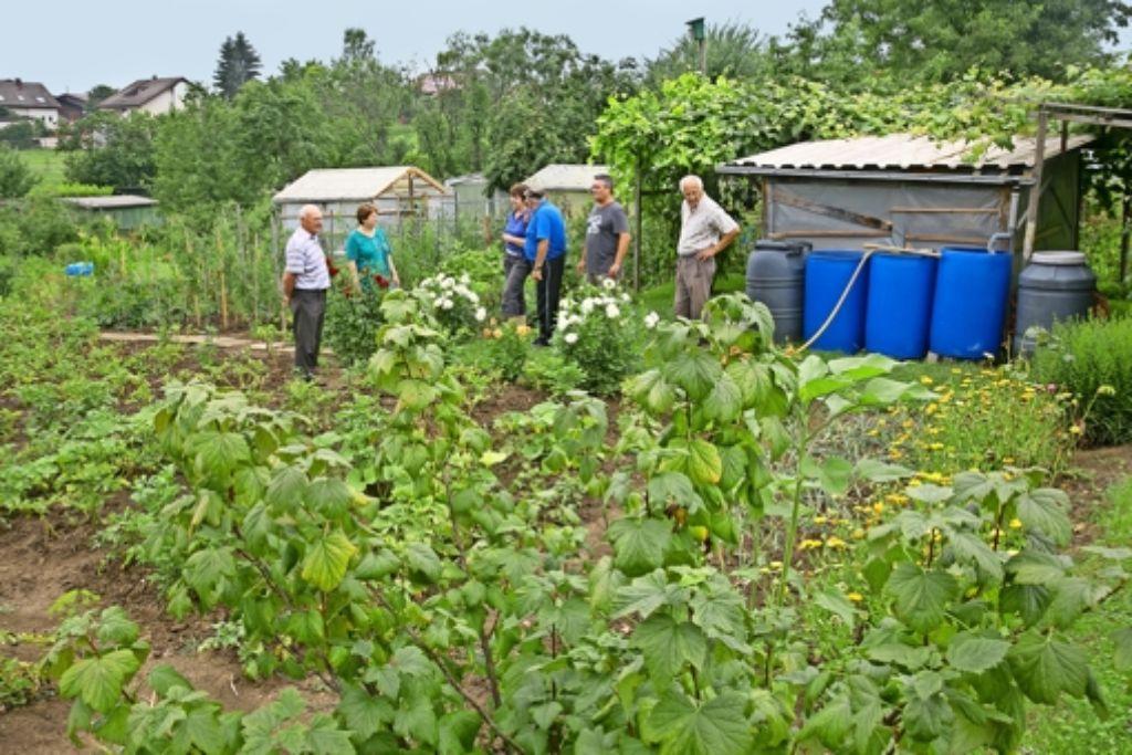 Dies wird die letzte Ernte für die Gärtner, sie müssen ihre Beete aufgeben. Foto: Horst Rudel