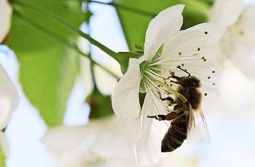 So will ein Stuttgarter die Bienen retten