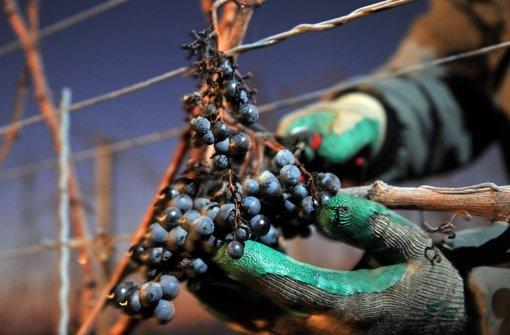 Die Zukunft des Weinbaus