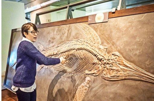 Rettung für Fischsaurier-Fossilien